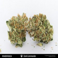 Rare Dankness Seeds Dank Commander Regular